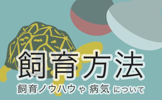 リクガメの飼育方法